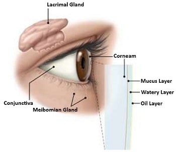 Dry Eye Symptoms, Discovering Common Dry Eye Symptoms